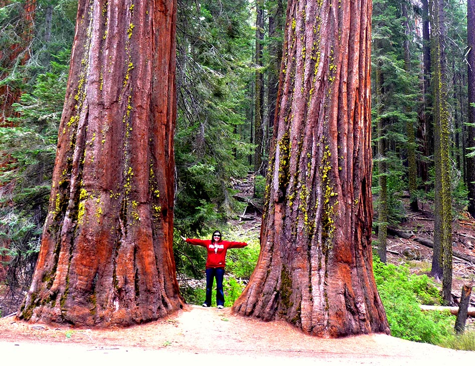 Dwarfed by the mighty Sequoia trees!