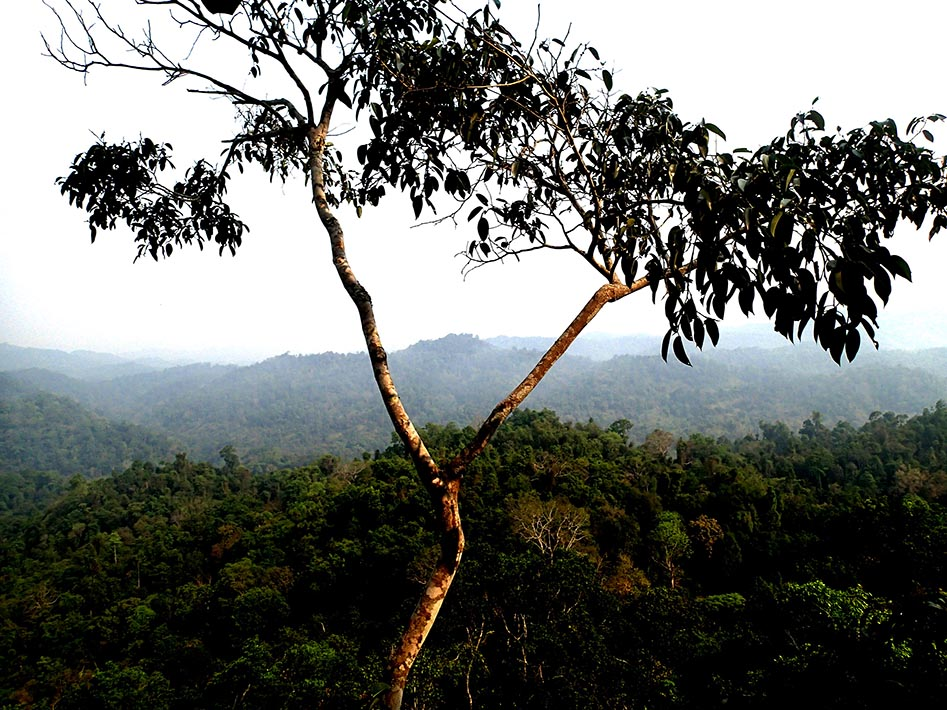 Living life in the trees on the Gibbon Experience