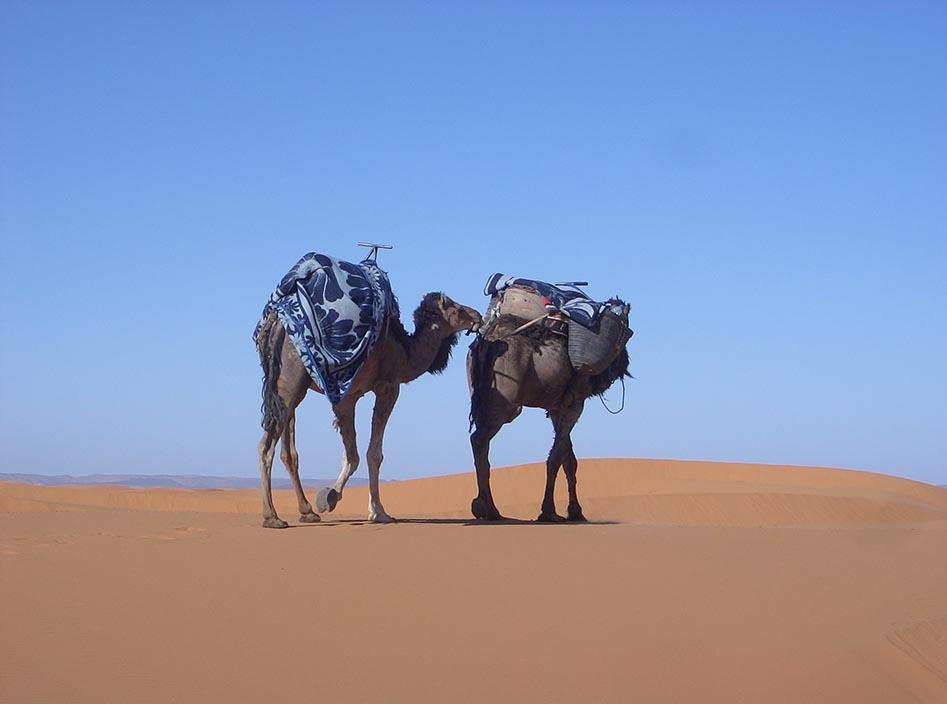 Morocco camel safari erg chebbi