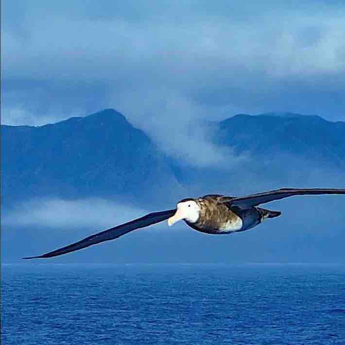 Albatros NaviMag ferry